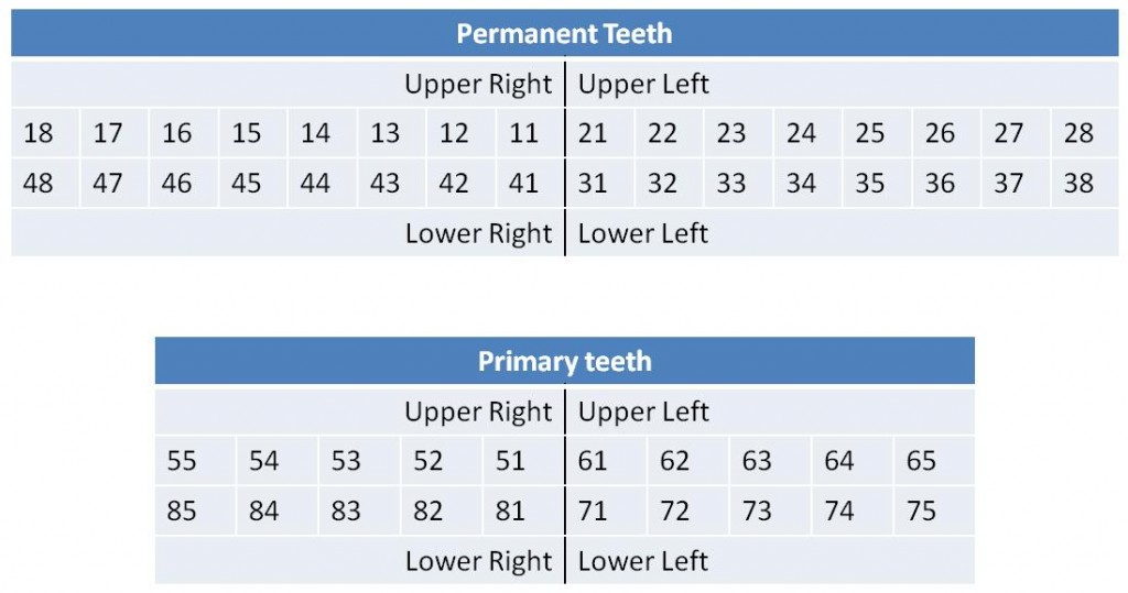 A Tooth By Any Other Name A Quick Overview Of Dental